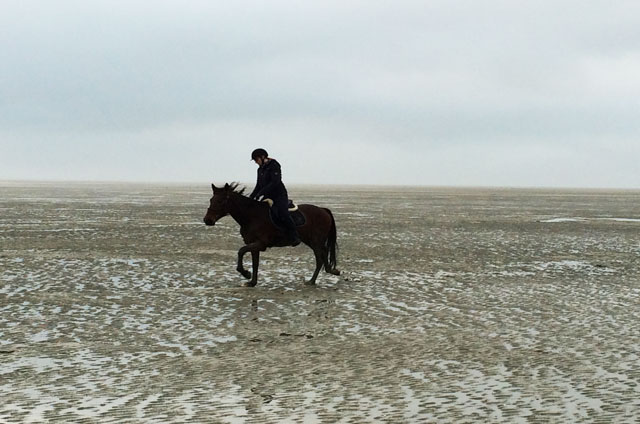 cheval dans la baie de somme